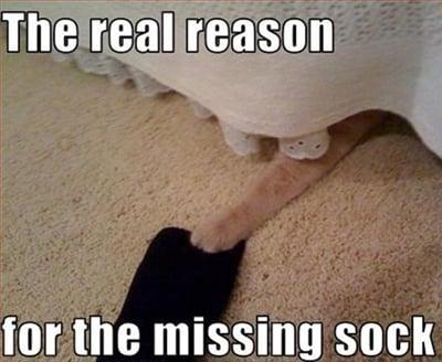 A cat hiding a socks