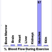 Blood Flow During Exercise