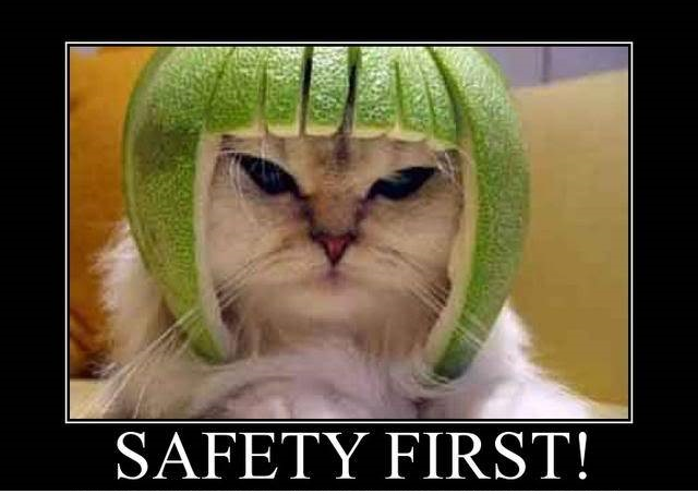 safety first cat