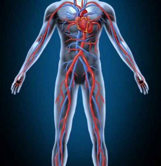 Diagram of blood circulation of the human body