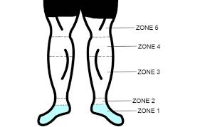 leg showing different compression zones