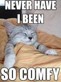 "Meme showing a kitten sleeping comfortably in a bed with the covers pulled up under their chin saying ""Never Have I Been So Comfy."""