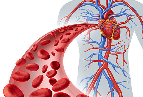 Blood flow to heart graphic