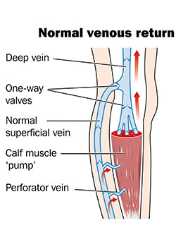normal venous return of blood